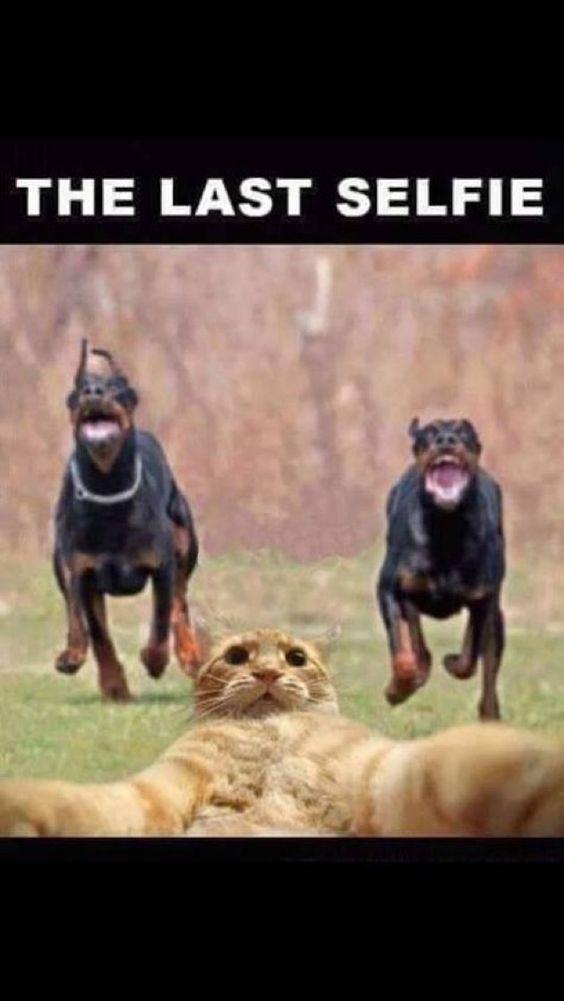 cats last selfie